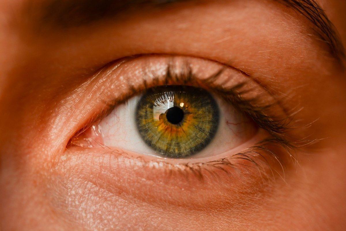 Oczy to wyrafinowany organ. To otóż to dzięki nim odczuwamy.